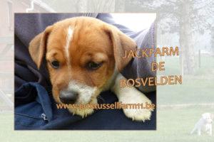 DOLFKEN - reu pup van OENA JACKFARM DE BOSVELDEN april 2017