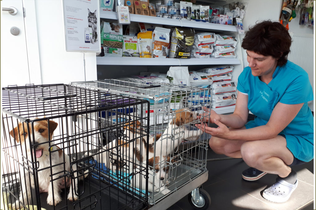 Eerste bezoek van Pipa en haar kroost aan de Dierenarts Lotte Paijmans... eerste vaccinatie
