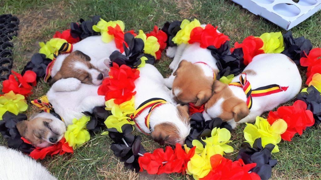 we hebben het warm..slapen in het gras om straks mee te supporteren voor de rode duivels