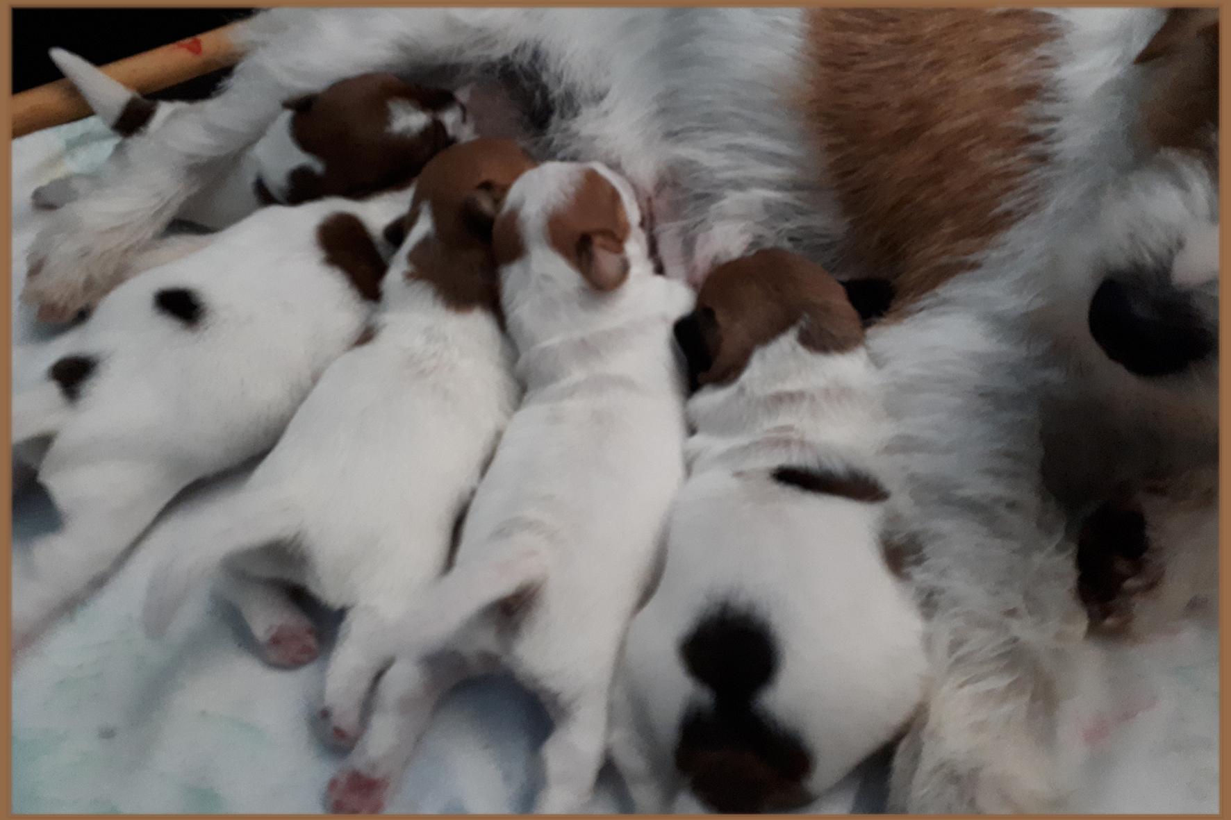 gegroet..vijfling één weekje na de geboorte